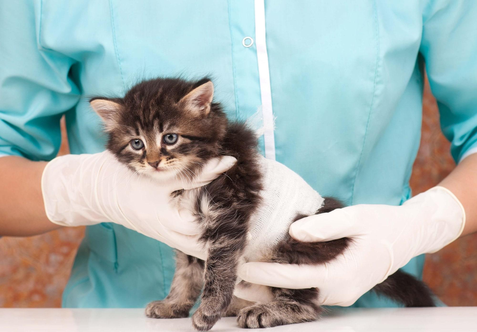 Pet Emergency Care - Cat Emergency